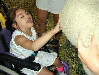 Girl touching sheep